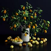 Kumquat and plums