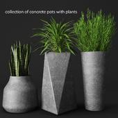 a set of concrete pots with plants
