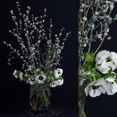 Anemones and branches