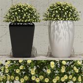 Flowers in pots 1