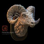 Портрет горный козел