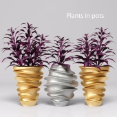 Plants in pots. Gold & Silver
