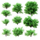 A set of bushes. 10 models
