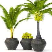 Coconut palm set 3