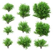 A set of bushes. 10 models. v2