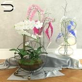 Set Plantas