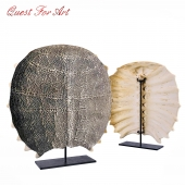 Freshwater Turtle Shell