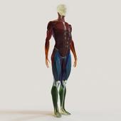 Система групп мышц + скелет