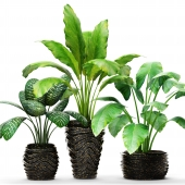 Collection of plants in pots 5
