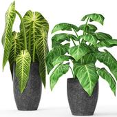 Коллекция растений в горшках 11