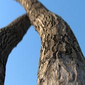 Material bark (photogrammetry)