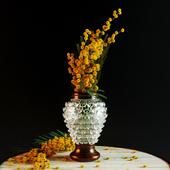 flowers mimosa
