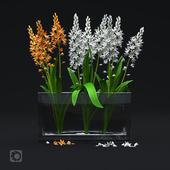 Цветок в стеклянной вазе. Ornithogalum thyrsoides