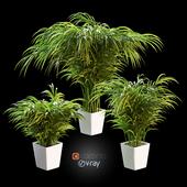 Пальма в горшке. 3 модели