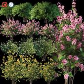 Set flowering shrubs 4