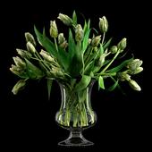 Green Parrot Tulips
