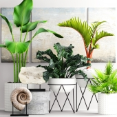 The collection of plants in pots 15