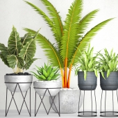 The collection of plants in pots 17