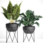 Коллекция растений в горшках 26
