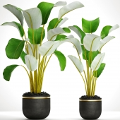 Коллекция растений в горшках 31