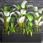 Коллекция растений в горшках 32