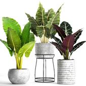 Коллекция растений в горшках 33
