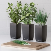 Plants for the kitchen