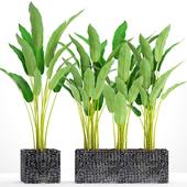 Коллекция растений в горшках 35