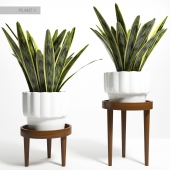 PLANT STAND 01