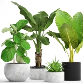 Collection of plants in pots 36