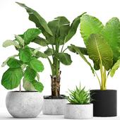 Коллекция растений в горшках 36