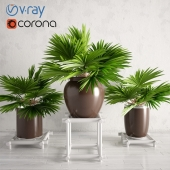 Potted Palm Plants Collection 003