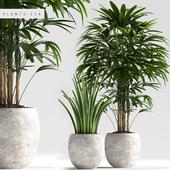 PLANTS 114