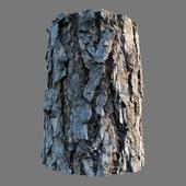 Материал коры сосны (фотограмметрия)