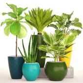 Коллекция растений в горшках.59