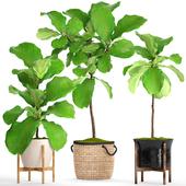 Коллекция растений в горшках. 57