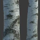 Material of tree bark (photogrammetry)