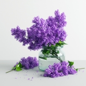 Lilac Flowers in a Jar
