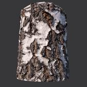 Material of birch bark (photogrammetry)