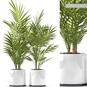 PLANTS 123