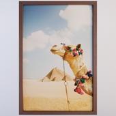 Camel In The Desert By Grant Faint
