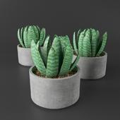 Succulent Plant 01