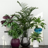 Plants collection 54