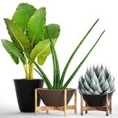 Коллекция растений 86