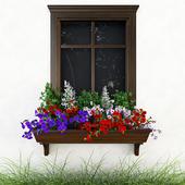 Petunia on the window