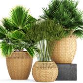 Коллекция растений 103.