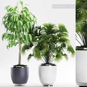 PLANTS 139