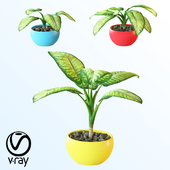 Home plant v3_2
