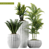 PLANTS 140