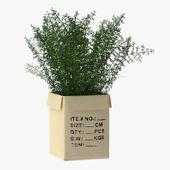 Pot Plant Nr_14